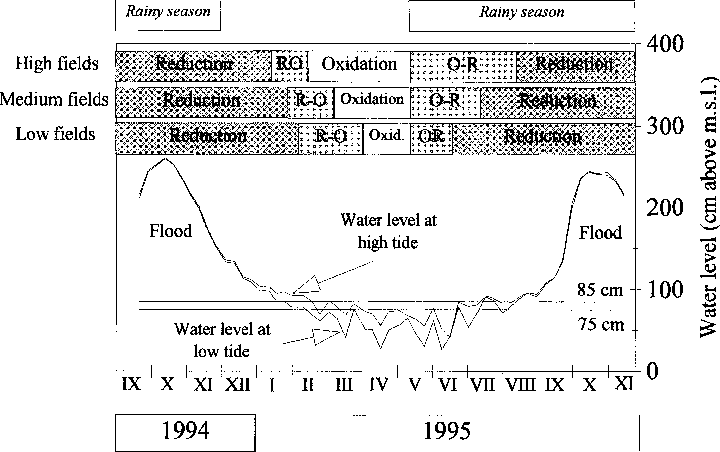Fig. 8. Changes in redox potential in relation to water table level and microelevation, 1994±1995.