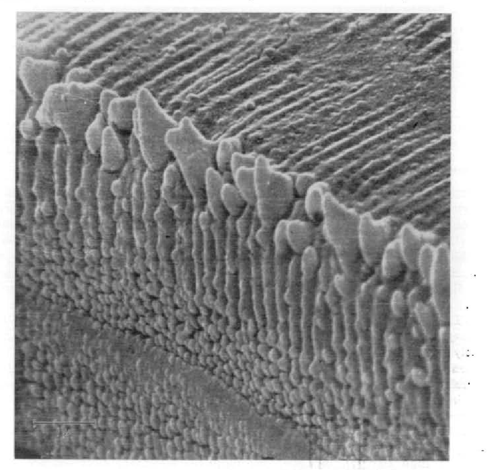 Figure 3 from Scanning microscopy with electrons and x-rays