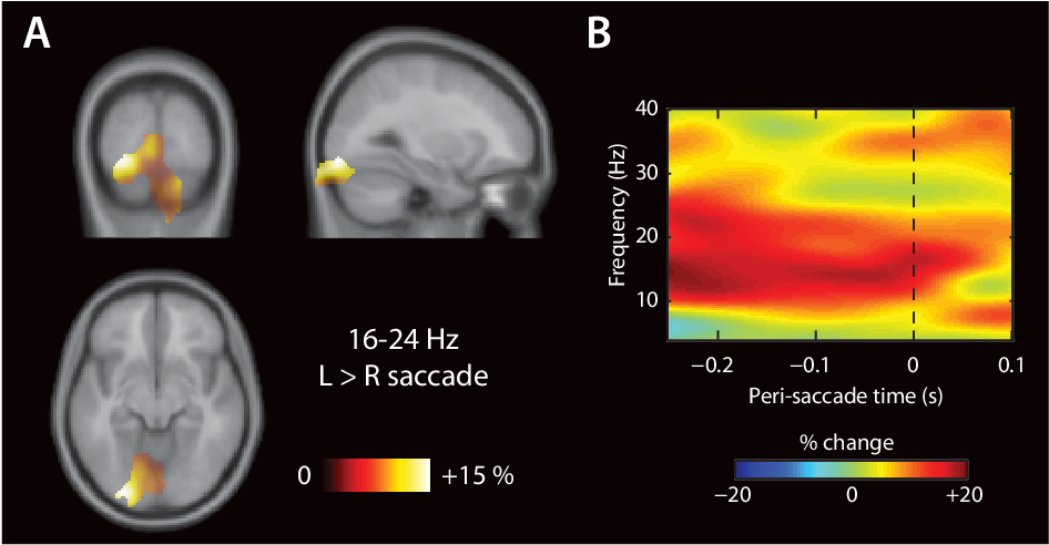 Figure 6.5: Alpha and beta power over le occipital cortex are elevated prior to a le ward, when compared with a rightward, saccade. Panels analogous to Figure 6.4.