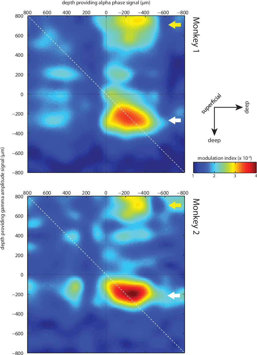 Figure 3.4: Topographical representations of the alpha (7-14 hz) to gamma (30-200 Hz) MI when considering all electrode combinations. e arrows indicate the deep layer alpha phase modulation of the granular (white arrow) and supragranular (yellow arrow) gamma amplitude.