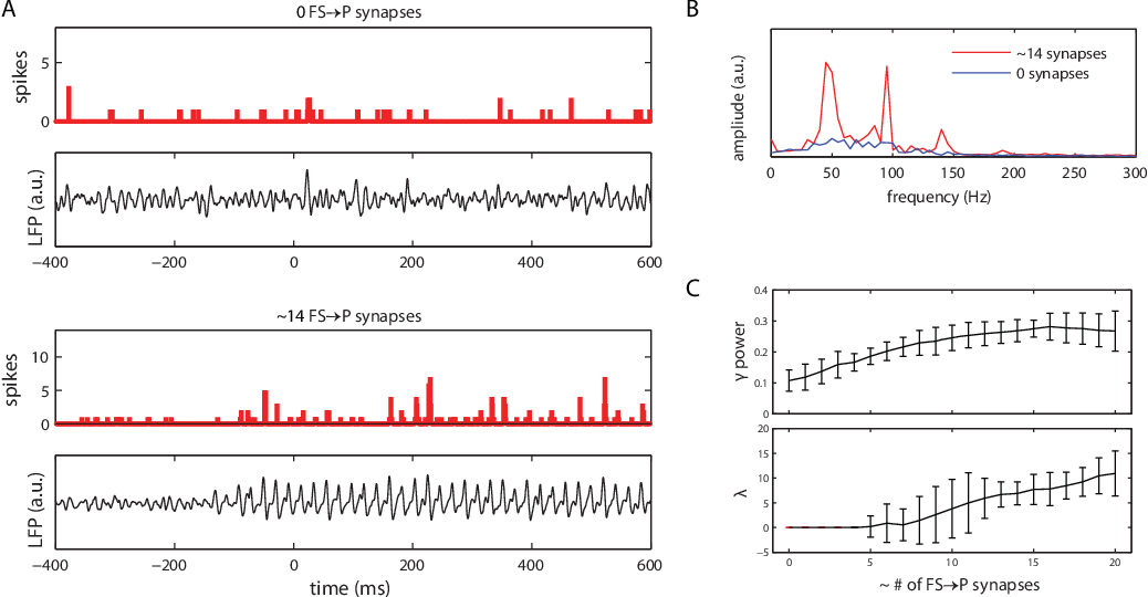 Figure 4.3: Pyramidal cells show gamma-synchronized activity when cells receive shunting inhibition. (A) Spike histograms and simulated LFP traces for the unconnected (0 FS to P synapses per P-cell) and connected (14 FS to P synapses per P-cell) conditions. Other input to the P-cells consisted of constant-rate Poisson spike trains. (B) Amplitude spectra for the simulated LFP in the connected (red) and unconnected (blue) conditions. e LFP spectrum for the connected condition shows a clear increase in power in the gamma band (30–80 Hz). (C) Relative gamma band power (top) and pyramidal cell network synchronization (bottom) as a function of the average number of GABA-ergic projections from the FS cells to a single P-cell. Relative gamma power increases steadily with the number of synapses, reaching a maximum at ≥ 15 synapses per P-cell. Network synchronization starts to occur at ≥ 5 synapses per P-cell. Shown are the mean values for 30 simulation runs; error bars represent 95 con dence interval.