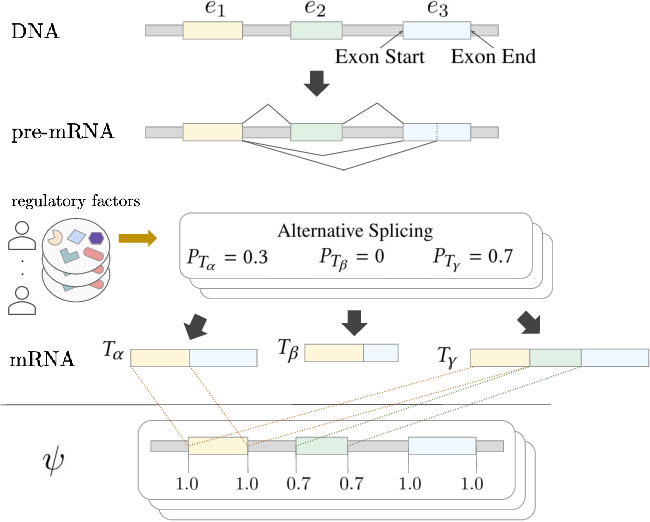 Figure 1 for RNA Alternative Splicing Prediction with Discrete Compositional Energy Network