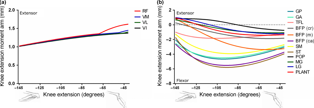Figure 9 from Muscle moment arms and sensitivity analysis of