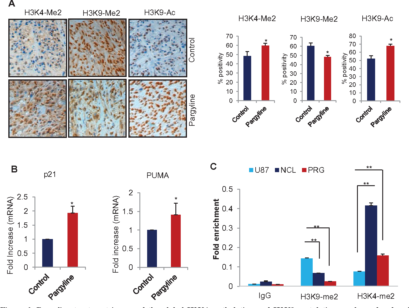 Figure 6: Pargyline treatment increased the global h3K4 methylation and h3K9 acetylation marks and reduced the h3K9 methylation in xenograft tumors. (A) IHC analysis of H3K4-me2, H3K9-me2 and H3K9-Ac marks was done on xenograft tumors that were treated with vehicle or pargyline (Left panel). Quantitation was done as described in the methods section. All data presented are the mean ± SEM. *, p< 0.05. (Right panel). (B) Total RNA was isolated from control or pargyline-treated tumors and subjected to RT-qPCR using the primers specific for p21 and PUMA. All data presented are the mean ± SEM. *, p< 0.05. (C) U87 cells were treated with pargyline or NCL-1 and ChIP analysis was performed using H3K4-me2 and H3K9-me2 antibodies and the status of epigenetic modification was analyzed using real-time PCR with p21 promoter-specific primers.