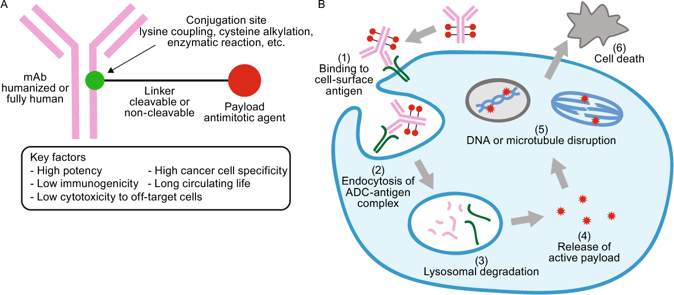 ADC Review, Journal of Antibody-drug Conjugates - ADC