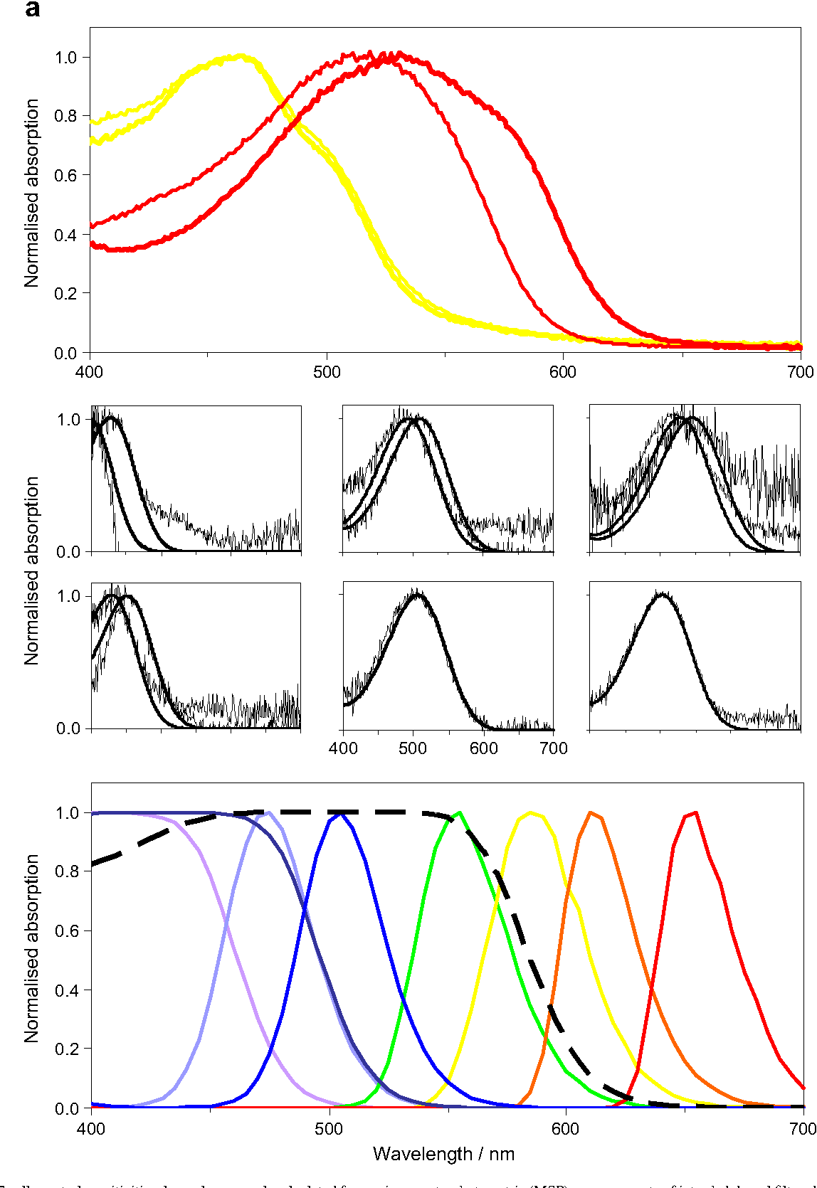 Figure 6 from Stomatopod eye structure and function: a review ...