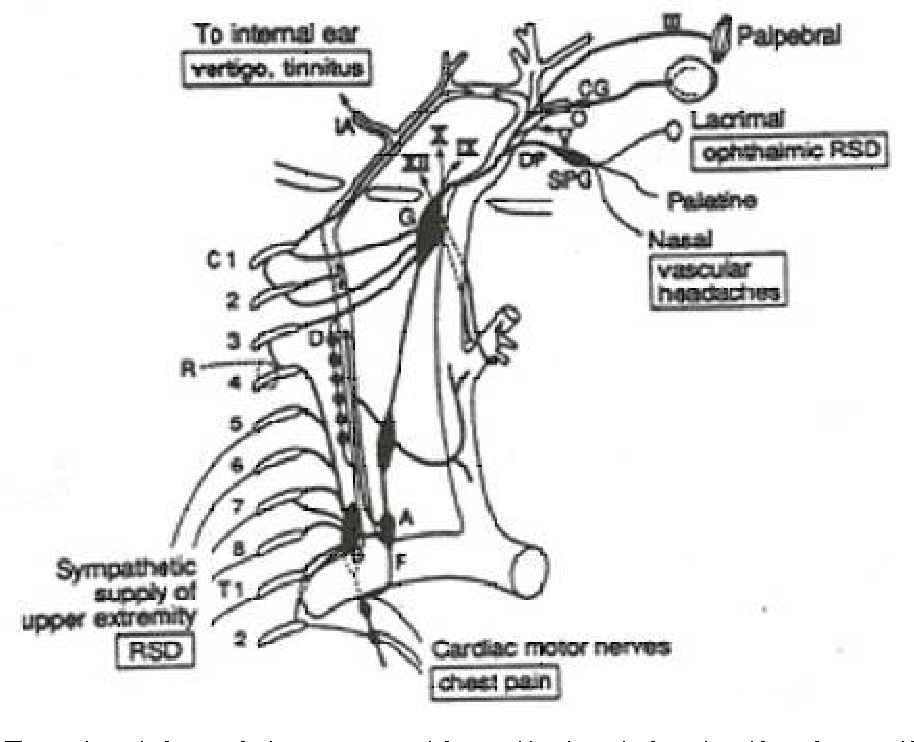 Figure 5 From Spine And The Autonomic Nervous System