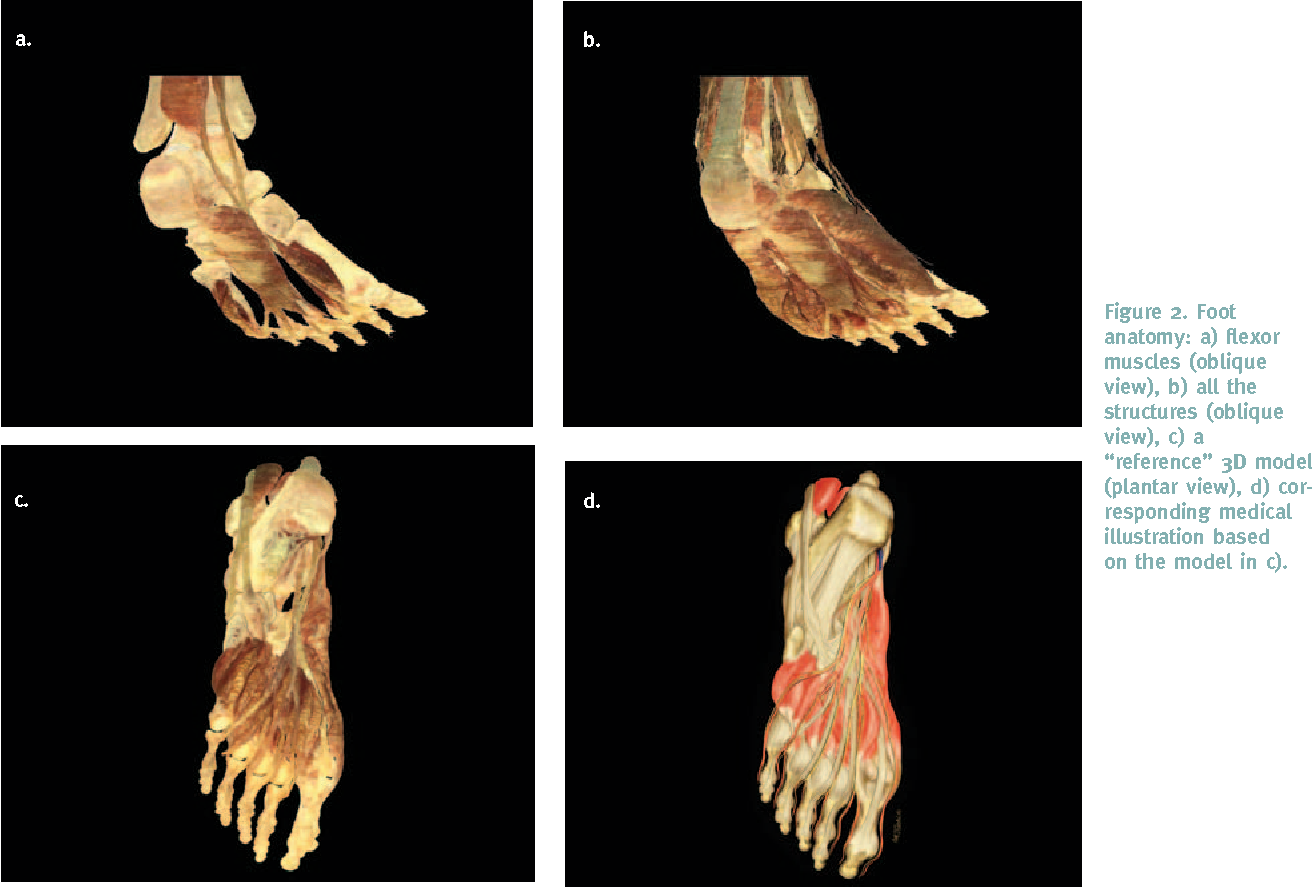 Figure 2 From Incorporating 3d Virtual Anatomy Into The Medical
