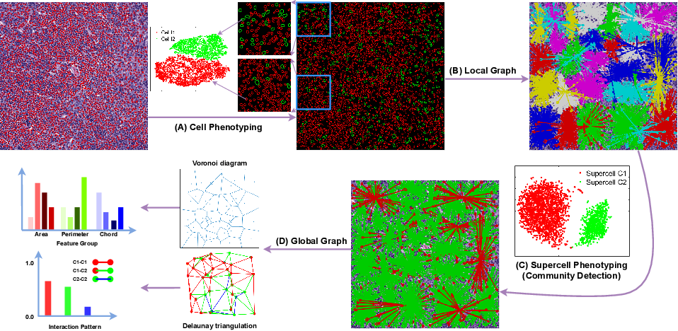 Figure 1 for Hierarchical Phenotyping and Graph Modeling of Spatial Architecture in Lymphoid Neoplasms