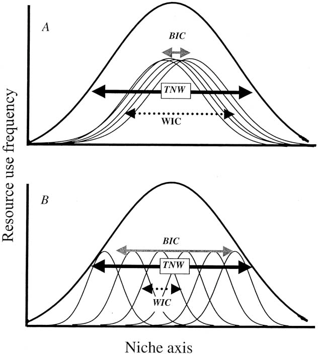 Figure 1: A schematic diagram of how individuals can subdivide the population's niche (thick curve). The total niche width (TNW, black arrow) is the variance of total resource use of all individuals (thin curves). , where WIC (dotted arrow) is the average of in-TNW p WIC BIC dividual niche widths, and BIC (gray arrow) is the variance in mean resource use among individuals. A, In a population of generalist individuals, WIC is a large proportion of TNW; B, WIC/TNW is small in a population of individual specialists. Although the idealized Gaussian curves used here are a poor description of niche shapes for many real organisms, they usefully convey the concept of between-individual variation. Real populations are likely to contain both generalized and specialized individuals, unlike the schematic diagrams shown here. Bolnick et al. (2002) describe alternative indices that do not rely on assumptions about resource distribution shapes and that can identify variation in individual niche widths.