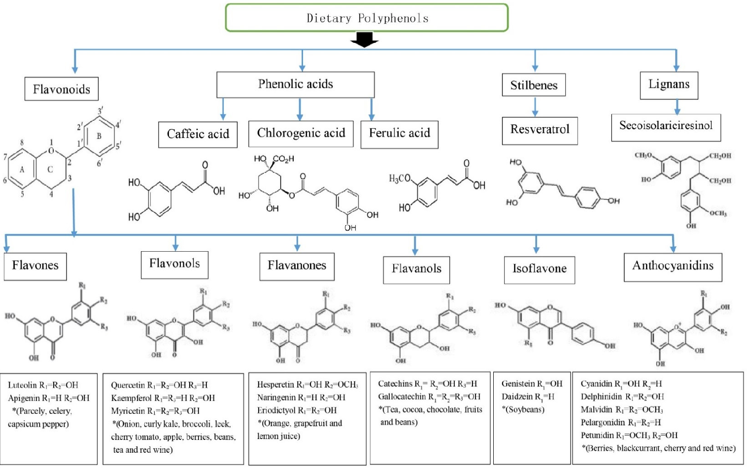 Polyphenols and Their Sources images