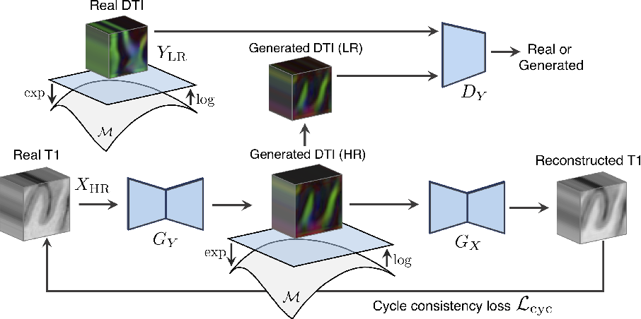Figure 1 for Manifold-Aware CycleGAN for High Resolution Structural-to-DTI Synthesis