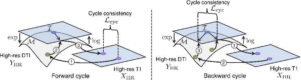Figure 3 for Manifold-Aware CycleGAN for High Resolution Structural-to-DTI Synthesis