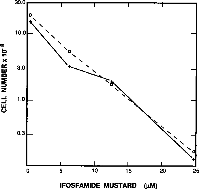 FIGURE 3. Surviving V79 (0) and SD1 (+) cells exposed to ifosfamide mustard at various concentrations. The experimental conditions are described in the legend to Figure 1.