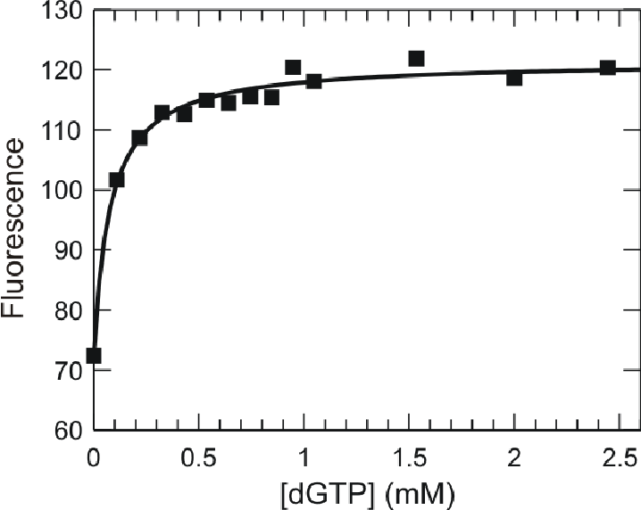 Kinetics of dna polymerase conformational changes during nucleotide figure 311 equilibrium titration of the mismatched nucleotide binding dgtp ccuart Gallery