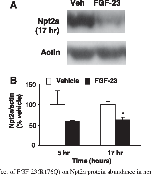 Fibroblast Growth Factor 23 Impairs Phosphorus And Vitamin D