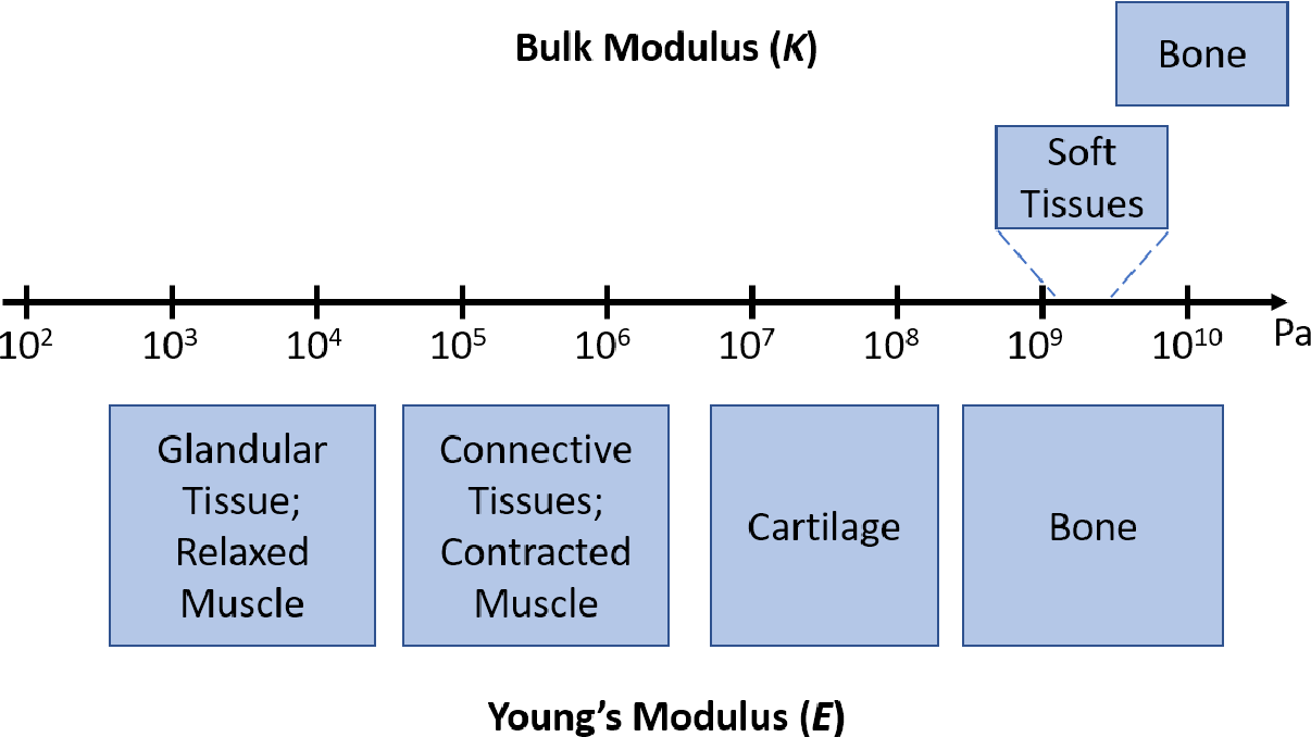 Figure 1 for Deep Learning in Ultrasound Elastography Imaging