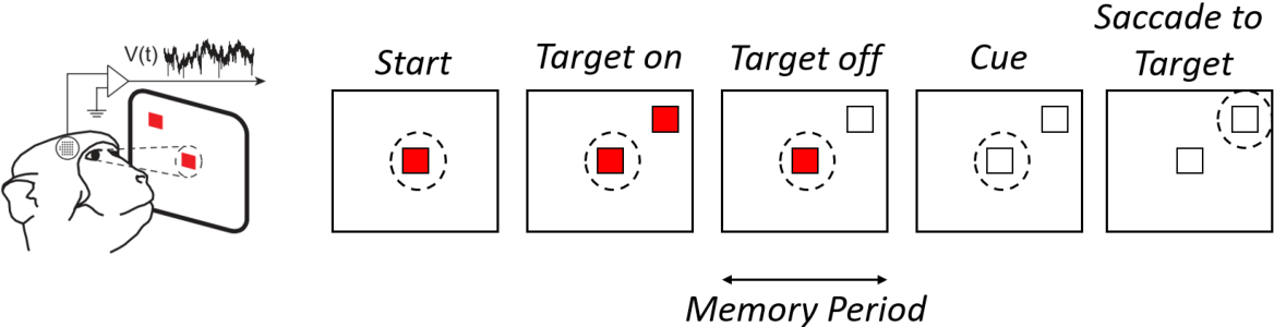Figure 1 for Cross-subject Decoding of Eye Movement Goals from Local Field Potentials