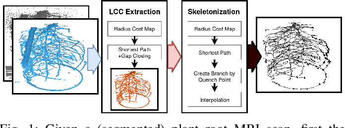 Figure 1 for Robust Skeletonization for Plant Root Structure Reconstruction from MRI