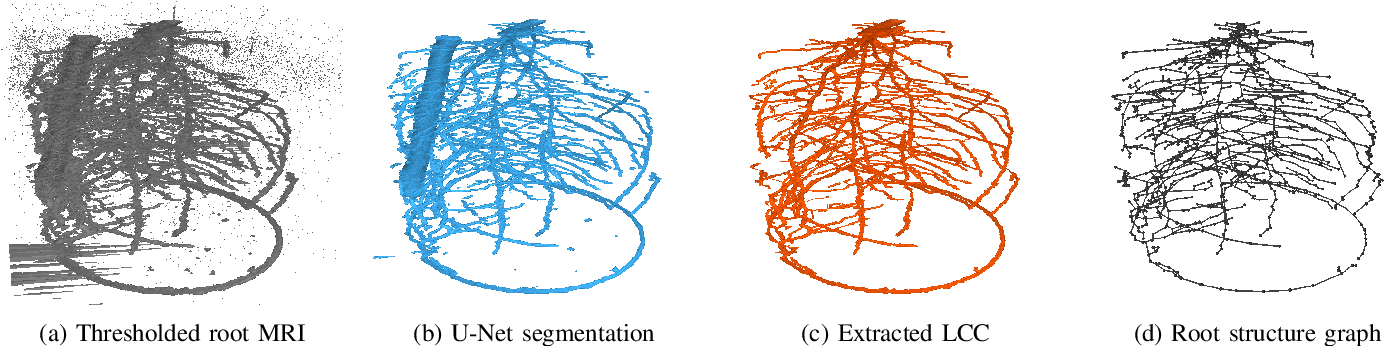 Figure 3 for Robust Skeletonization for Plant Root Structure Reconstruction from MRI