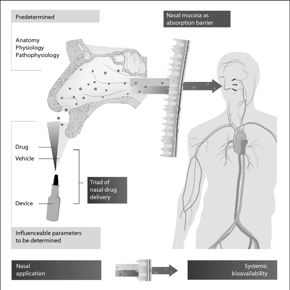 Figure 3 from Nasal drug delivery in humans. - Semantic Scholar