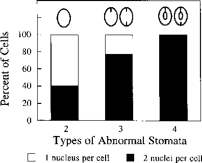 PDF] Characterization of a cytokinesis defective (cyd1) mutant of