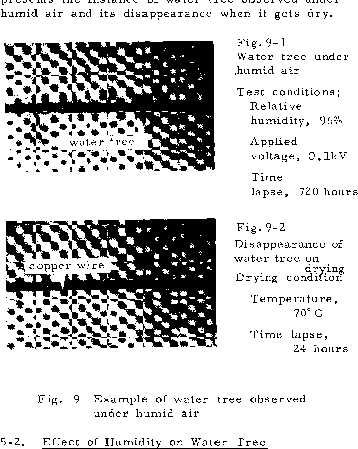 New findings on water tree in high polymer insulating materials 9 example of water tree observed under humid air ccuart Gallery