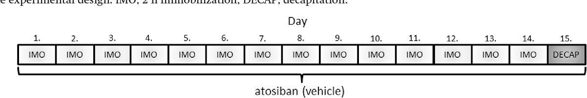 Fig. 1. The experimental design. IMO, 2 h immobilization; DECAP, decapitation.