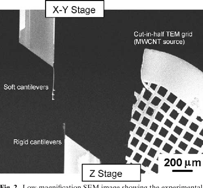 Fig. 2. Low-magnification SEM image showing the experimental setup and the MWCNT source for the nanoscale tensile test