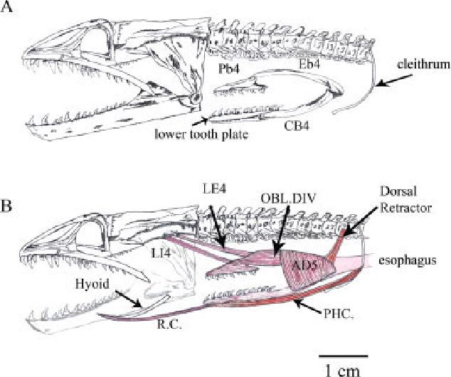 Moray Eel Diagram | Wiring Diagram on