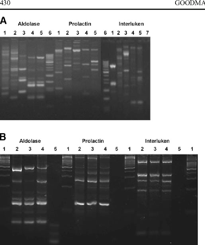Figure 4. Characterization of the TcA cell line by DAF-PCR using the indicated primers. (A) Analysis of the TcA cell line, other selected coleopteran cell lines, and T. castaneum pupae. Lanes: (1) IPLB-DU (D. undecimpunctata, P737); (2) DSIR-HA-1179 (H. arator, P47); (3) BRL-Ag3C (A. grandis, P18); (4) BCIRL-TcA-CLG1 (T. castaneum, P3); (5) T. castaneum pupae; (6) DNA Ladder (1 kb); (7) water control. (B) Analysis of the TcA cell line at different passages. Lanes: (1) DNA ladder (1 kb); (2) TcA cells, P9; (3) TcA cells, P21; (4) TcA cells, P79; (5) water control.
