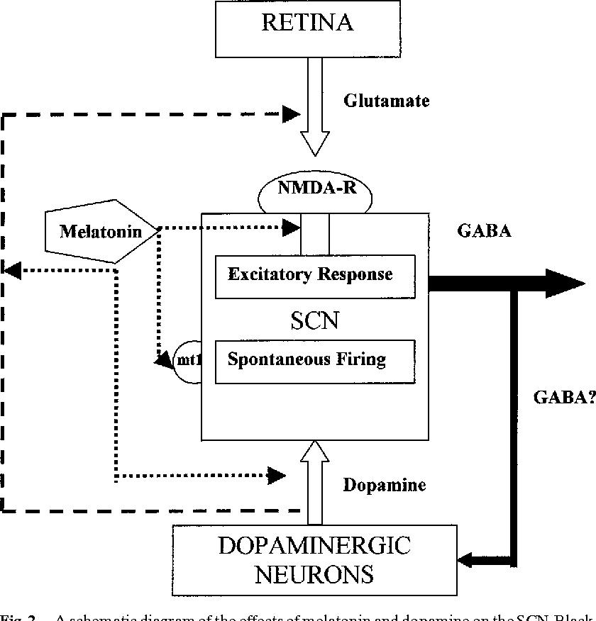 Figure 2 from Melatonin–Dopamine Interactions: From Basic