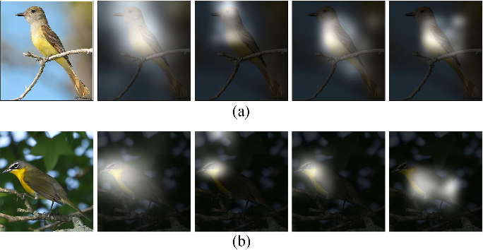 Figure 1 for Diversified Visual Attention Networks for Fine-Grained Object Classification