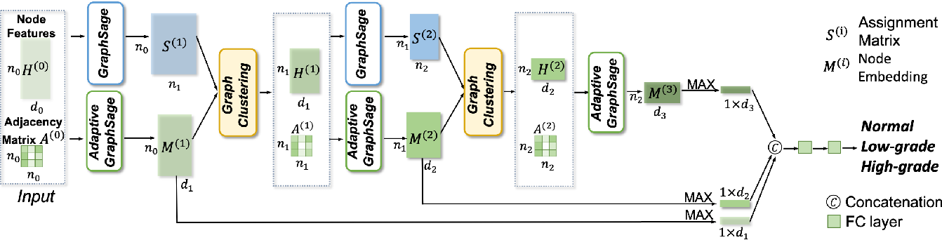Figure 4 for CGC-Net: Cell Graph Convolutional Network for Grading of Colorectal Cancer Histology Images