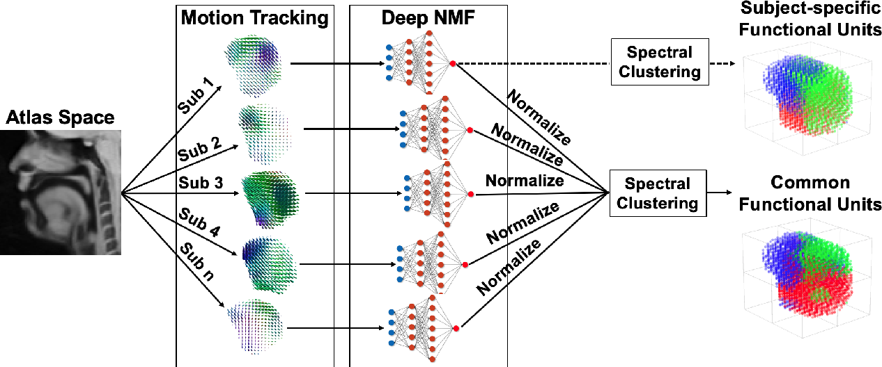 Figure 1 for A Deep Joint Sparse Non-negative Matrix Factorization Framework for Identifying the Common and Subject-specific Functional Units of Tongue Motion During Speech