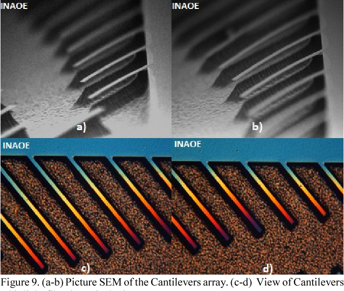 Figure 9. (a-b) Picture SEM of the Cantilevers array. (c-d) View of Cantilevers whit light filter in optical microscope.