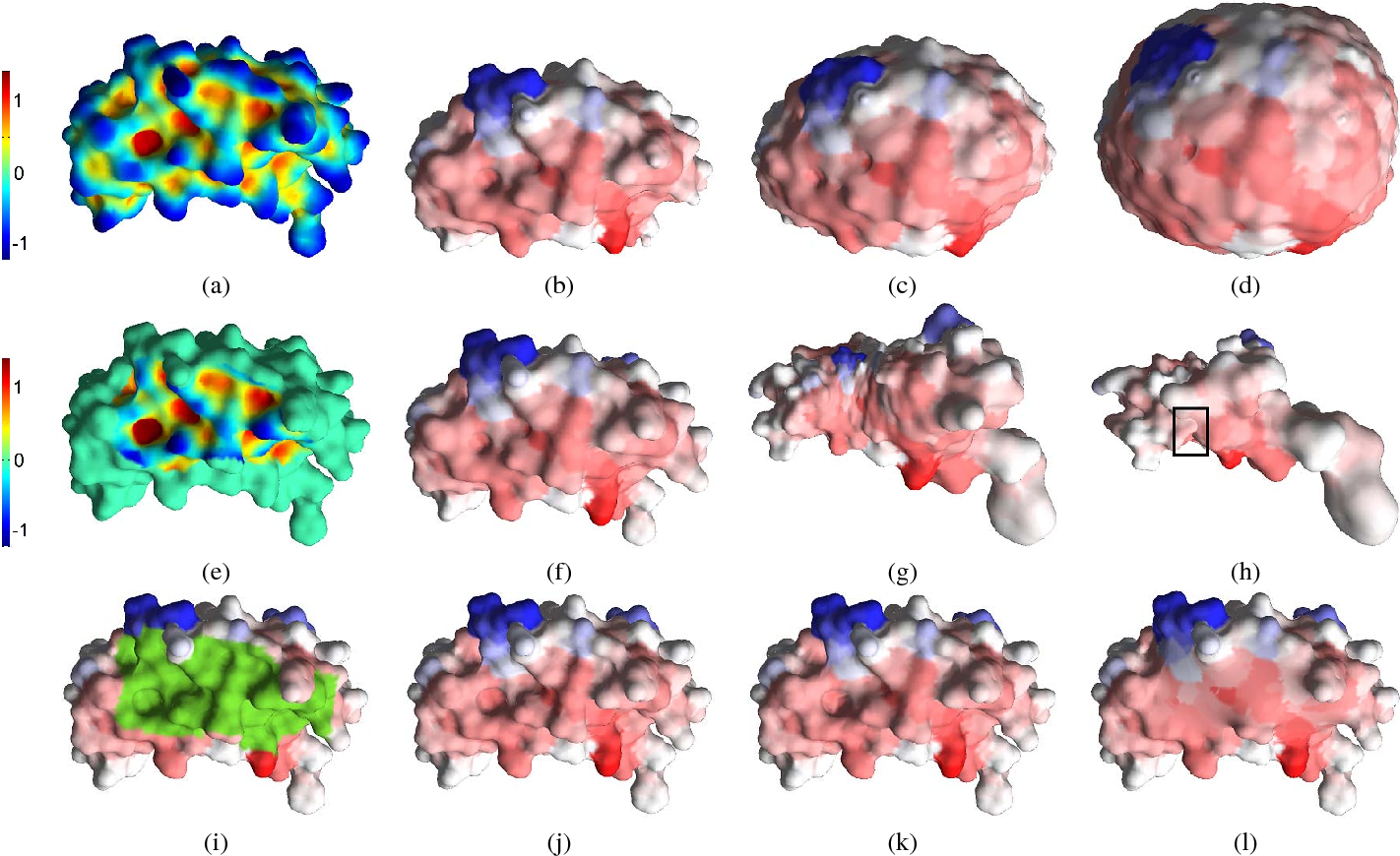 Figure 2 for LMap: Shape-Preserving Local Mappings for Biomedical Visualization