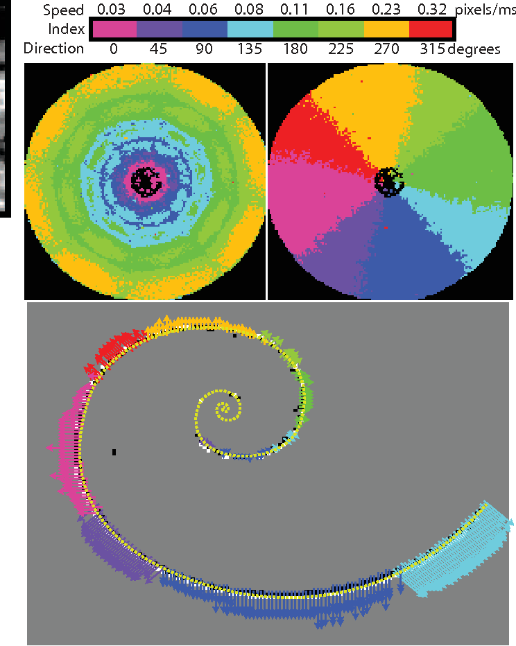 Figure 2 for Bioinspired Visual Motion Estimation