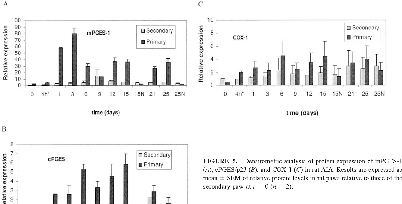 FIGURE 5. Densitometric analysis of protein expression of mPGES-1 (A), cPGES/p23 (B), and COX-1 (C) in rat AIA. Results are expressed as mean SEM of relative protein levels in rat paws relative to those of the secondary paw at t 0 (n 2).