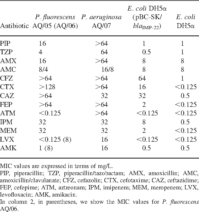 Table 2. MICs of different b-lactams for P. fluorescens AQ/05 and AQ/06, P. aeruginosa AQ/07, E. coli DH5a (pBC-SK/blaIMP-22) and the E. coli DH5a recipient