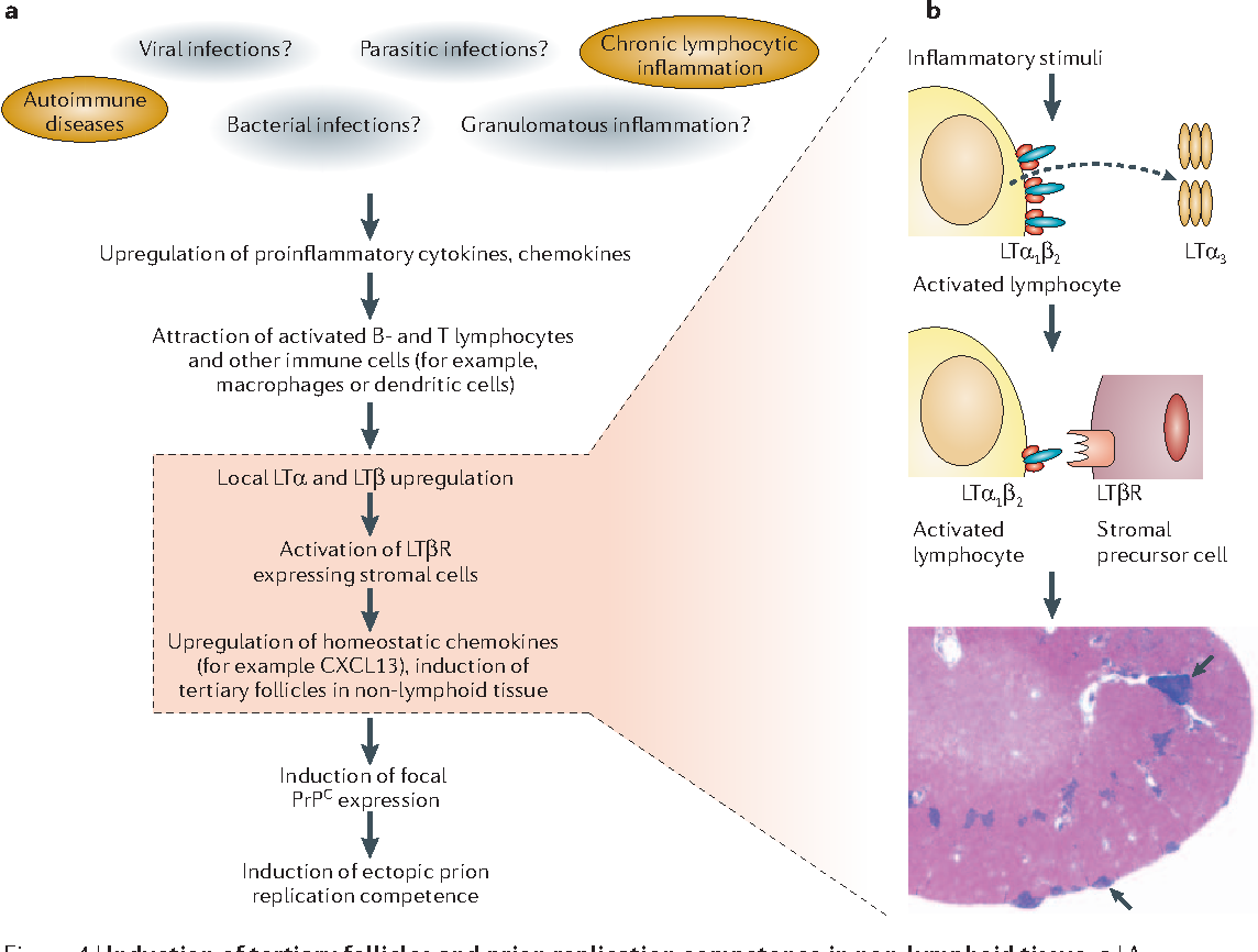 Pathogenesis Of Prion Diseases Current Status And Future Outlook