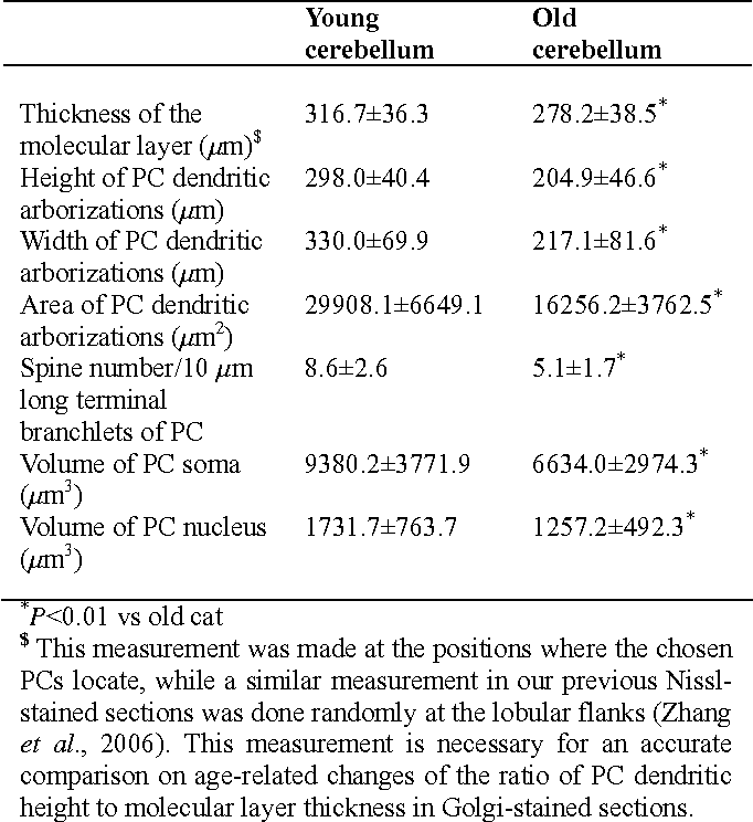 Table I.- Morphological parameters of Purkinje cells (PCs) in the cerebellar cortex of the young and old cats*