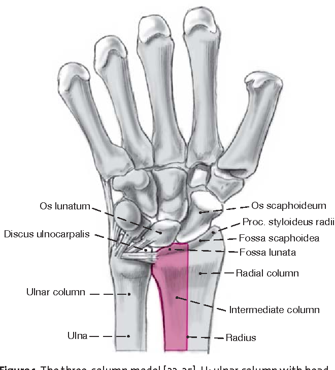 Dorsal Double-Plate Fixation of the Distal Radius - Semantic Scholar