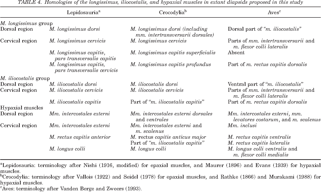 homologies of the longissimus iliocostalis and hypaxial muscles in