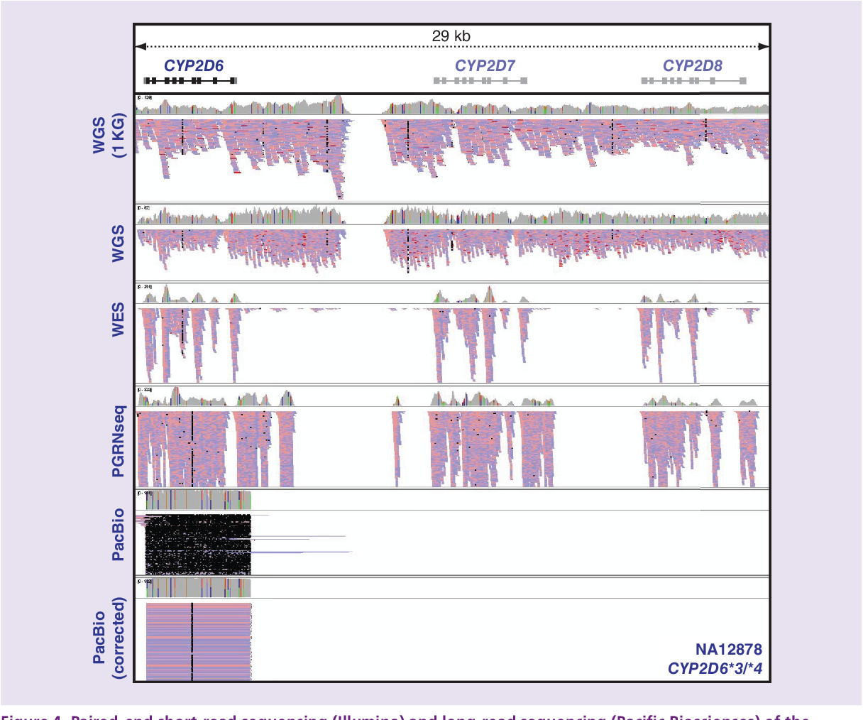 Figure 4 from Sequencing the CYP2D6 gene: from variant