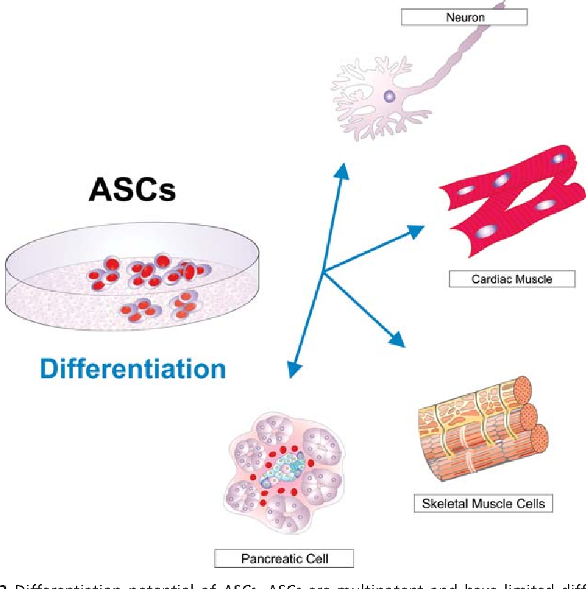 Figure 2 from Human stem cell research and regenerative medicine