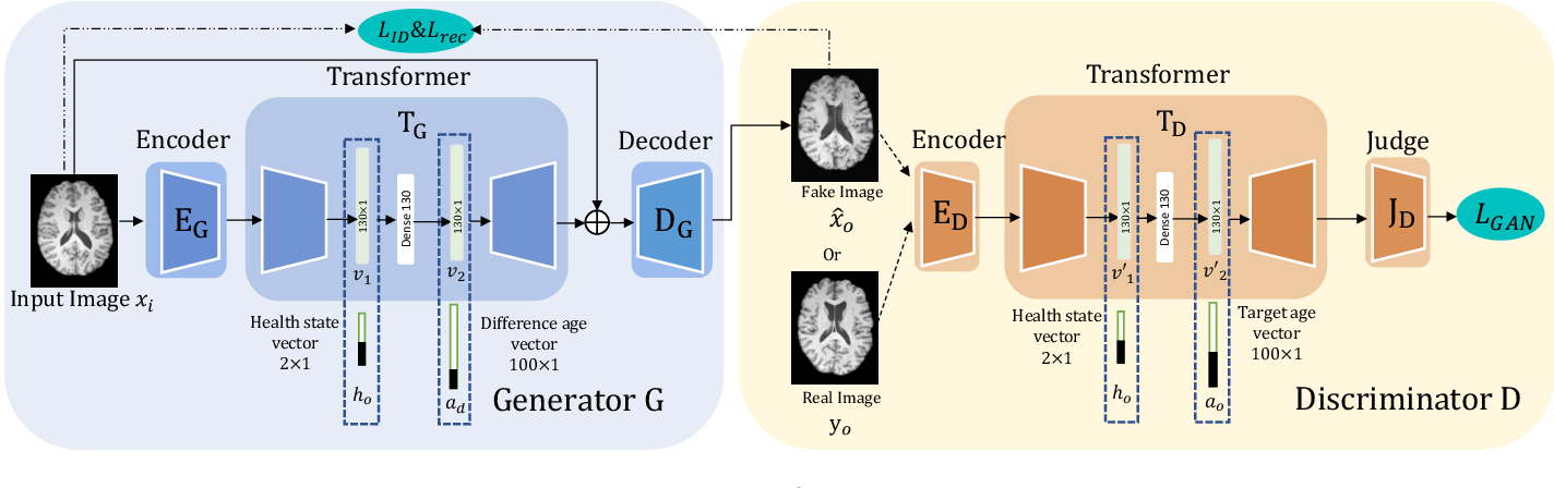 Figure 3 for Learning to synthesise the ageing brain without longitudinal data
