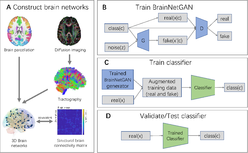 Figure 1 for BrainNetGAN: Data augmentation of brain connectivity using generative adversarial network for dementia classification