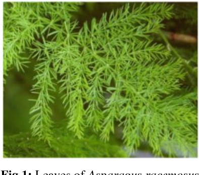 PDF] Significance of some medicinal plants in Bhimtal region
