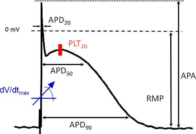 """Fig. 1 Action potential from a patient in sinus rhythm to illustrate analysis of action potential parameters. APA action potential amplitude (mV); RMP resting potential (mV), APD20, APD50, and APD90, action potential duration at 20, 50, and 90 % of repolarization (in ms), dV/dtmax, maximum rate of depolarization (Vs −1), and the """"plateau potential"""" defined as the mean absolute membrane potential (mV) in the time window between 20 % of APD90 plus 5 ms (PLT20)"""